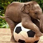 elefante_filhote_bola1